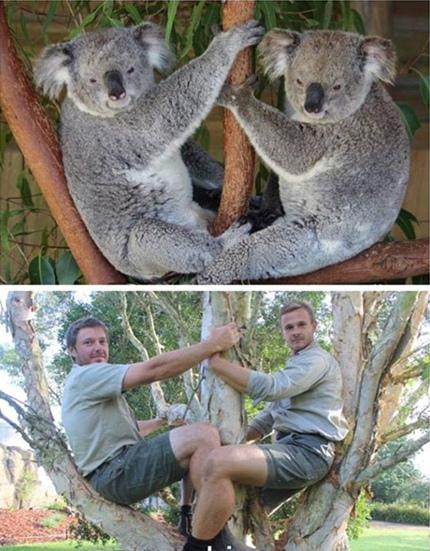 动物园管理员模仿动物搞笑照片蹿红网络(组图) (5)