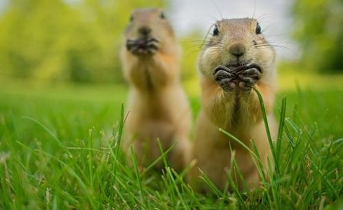 你知道野生动物比人类更搞笑吗【组图】