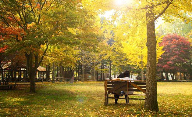 壁纸 风景 森林 桌面 630_383