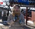 南怡岛冬季恋歌        人民网韩国公司独家出品系列视频栏目《微视韩流》第三十二期