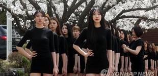 韩国女生樱花树下集体走秀 别样春景吸睛