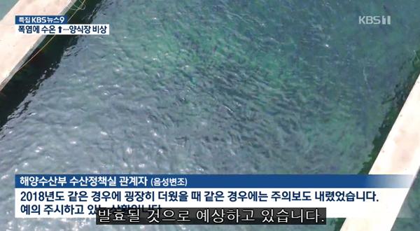 罕见!韩国遇暴雨酷暑天气 东海岸水温飙升或殃及鱼群