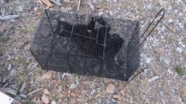 """骇人听闻!韩国""""动物版N号房""""被检举 或有未成年人参与虐杀动物"""